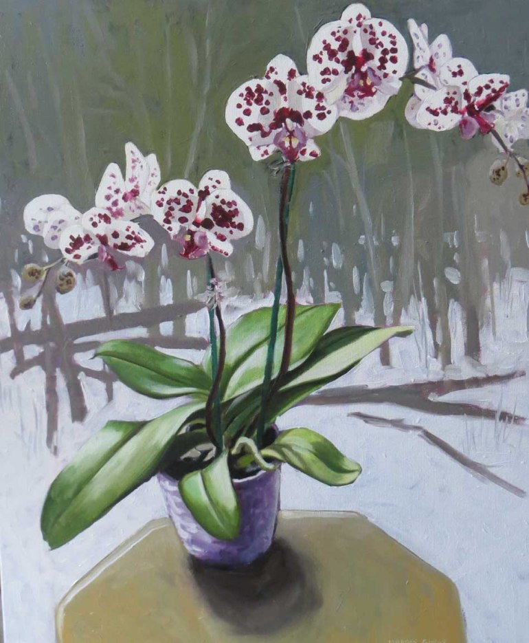 12 20 17 spotted moth orchid 24x20